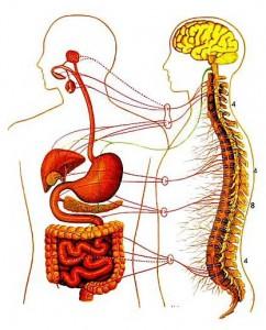 Schema nervo viscerale